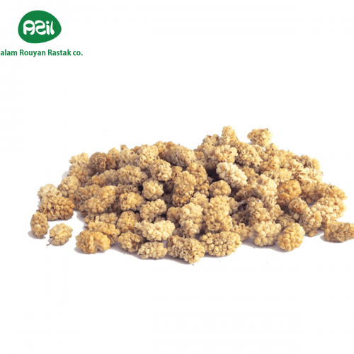 white mulberry 500x500 - Azil Organic White Mulberry