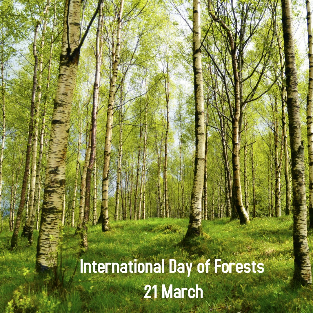 International forest day 1 - International Day of Forests