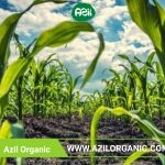 Organic food 150x150 - What makes organic products superior?