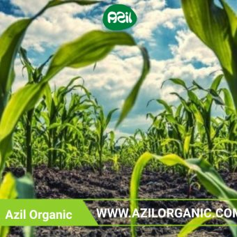 Organic food 340x340 - What makes organic products superior?