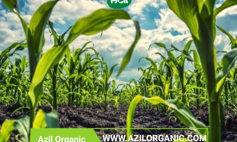 Organic food 900x540 - What makes organic products superior?