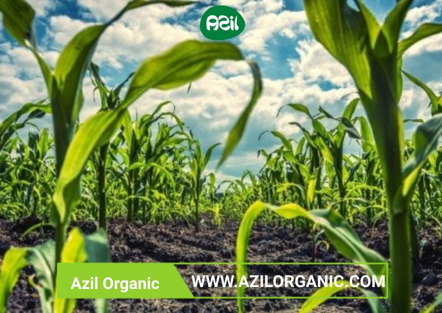 Organic food - What makes organic products superior?